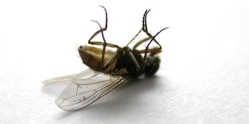 Fruchtfliegenfallen kann man selber machen